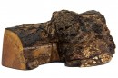 Big Leaf Maple Burl Keepsake