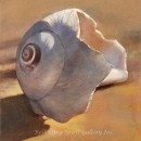Broken Moonsnail